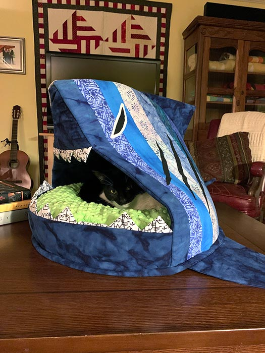 Bruce in the Shark Bait Cat Bed - Quilted Joy